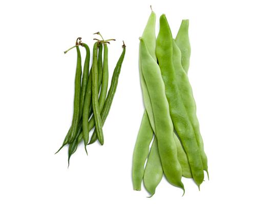 Jud a - Cultivar judias verdes ...